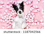 dog looking and staring at you  ... | Shutterstock . vector #1187042566