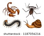 big set of insects. vintage... | Shutterstock .eps vector #1187056216