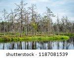 reflections of dead tree trunks ... | Shutterstock . vector #1187081539