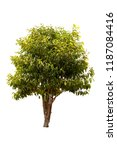 a big tree isolated on white... | Shutterstock . vector #1187084416