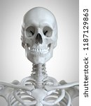 3d rendered medically accurate... | Shutterstock . vector #1187129863
