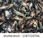 fresh shrimps prawns boiling... | Shutterstock . vector #1187133766