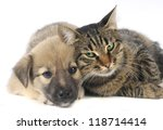 Stock photo cat and dog on a white background 118714414