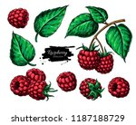 raspberry vector drawing.... | Shutterstock .eps vector #1187188729