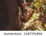 picking wild mushrooms in... | Shutterstock . vector #1187191846