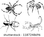vector drawings sketches... | Shutterstock .eps vector #1187248696