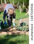 female gardener handling plants ... | Shutterstock . vector #1187310436