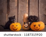 Black little cat with halloween ...