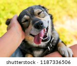 cute dog put his face on his... | Shutterstock . vector #1187336506