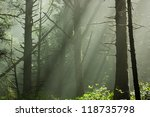 scenic view of rays of sun... | Shutterstock . vector #118735798