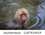 Small photo of some macaque apes take a bath with the family in asia japan