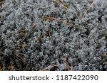 reindeer moss background | Shutterstock . vector #1187422090