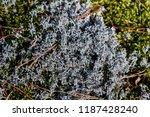 reindeer moss closeup | Shutterstock . vector #1187428240