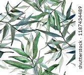 watercolor green willow...   Shutterstock . vector #1187434489
