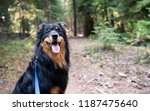 black and brown australian... | Shutterstock . vector #1187475640