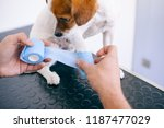 veterinarian using an aseptic... | Shutterstock . vector #1187477029