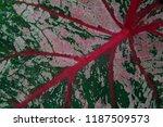 pink green leaf pattern... | Shutterstock . vector #1187509573