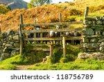 Welcoming Lakeland Farming Sheep