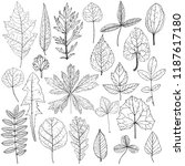 vector drawing leaves of wild...   Shutterstock .eps vector #1187617180
