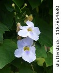 nature     plant  flower | Shutterstock . vector #1187654680