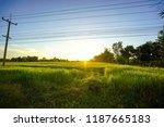 field is beautiful natural ... | Shutterstock . vector #1187665183