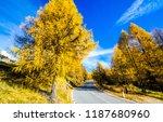 autumn forest road landscape.... | Shutterstock . vector #1187680960
