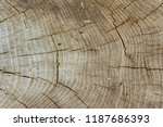 Texture Of Wood Grain With Tre...