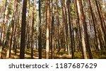 beautiful natural forest...   Shutterstock . vector #1187687629