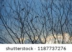 tree branch and bird silhouette ... | Shutterstock . vector #1187737276