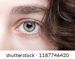 closeup macro shot of female... | Shutterstock . vector #1187746420