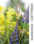 flowers on a background blur.... | Shutterstock . vector #1187755810