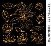 flowers  leaves  branch. hand... | Shutterstock .eps vector #1187811256