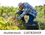 handsome man farmer in the vine ...