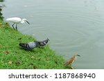 many species of birds are at... | Shutterstock . vector #1187868940