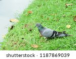 many species of birds are at... | Shutterstock . vector #1187869039
