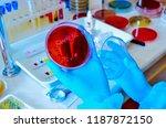 petri dish. microbiological... | Shutterstock . vector #1187872150