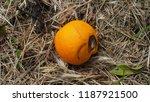 spoiled citrus fruit in the... | Shutterstock . vector #1187921500