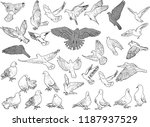 illustration with thirty one... | Shutterstock .eps vector #1187937529