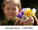 Bunch of crocuses against a background of a little girl - stock photo