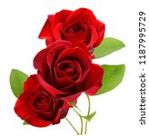 Stock photo a red rose branch flower isolated 1187995729