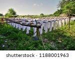 silk garden at mandalay | Shutterstock . vector #1188001963