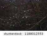 plants in fall   Shutterstock . vector #1188012553