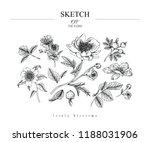 sketch floral botany set.... | Shutterstock .eps vector #1188031906