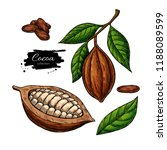 cocoa vector superfood drawing... | Shutterstock .eps vector #1188089599