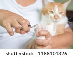 the cat is still keeping the... | Shutterstock . vector #1188104326