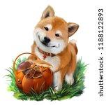Dog Shiba Inu And A Basket Of...