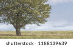 solitary tree in a foggy field | Shutterstock . vector #1188139639