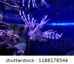 zebrafish   firefish  tastyfish ... | Shutterstock . vector #1188178546