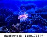 zebrafish   firefish  tastyfish ... | Shutterstock . vector #1188178549