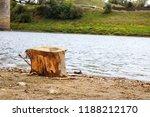 Tree Stump On The Sandy River...